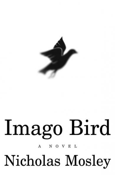 Imago Bird